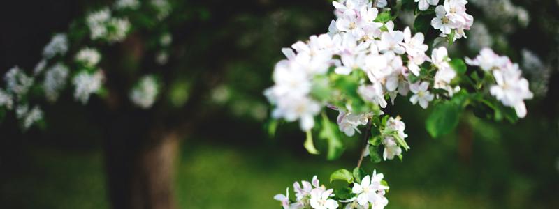 kundservice-blomma